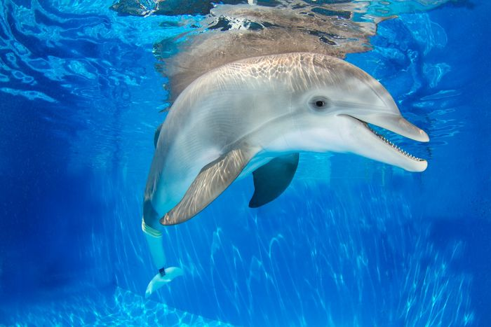 Winter the Dolphin - Clearwater Marine Aquarium
