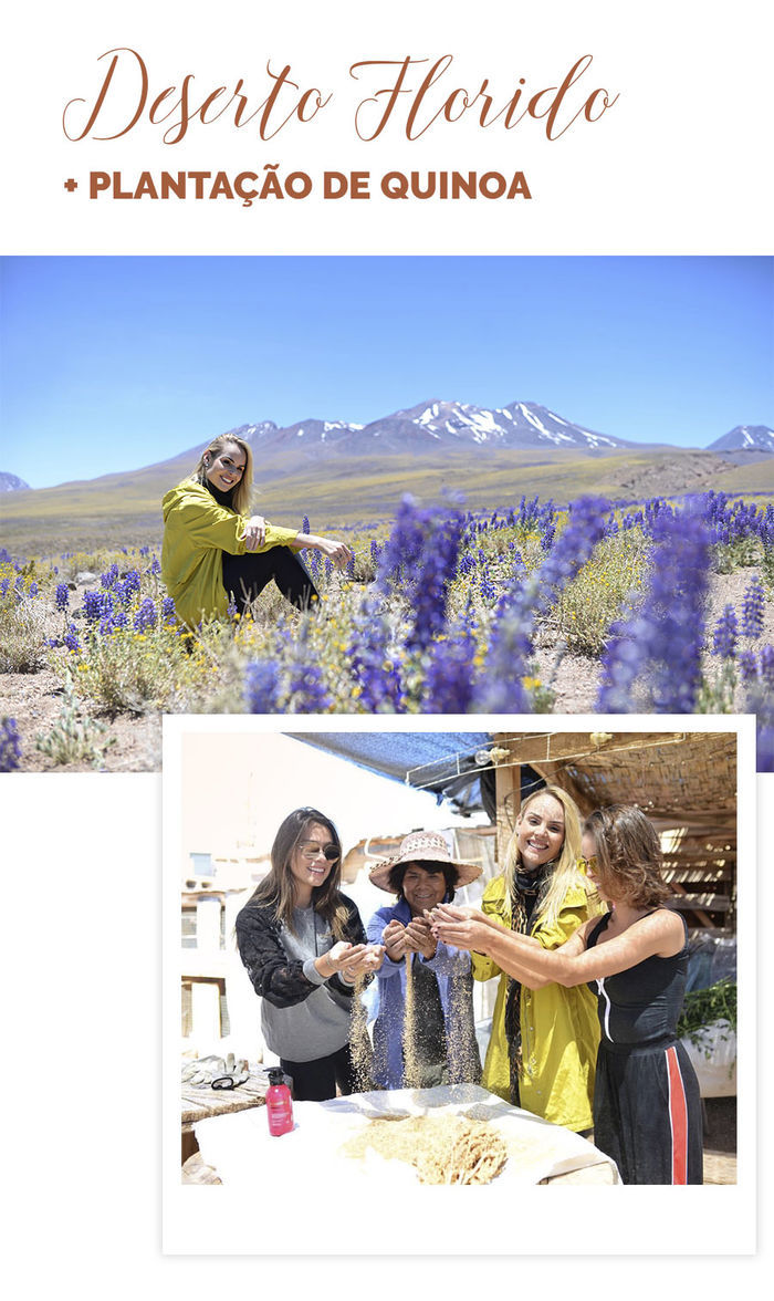 Diário de Bordo: Layla no Atacama - Deserto florido - Plantação de quinoa